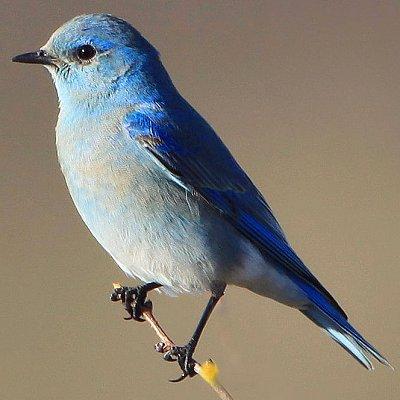 Spiritual Vigor The Wonderful State Birds Of The U S 51