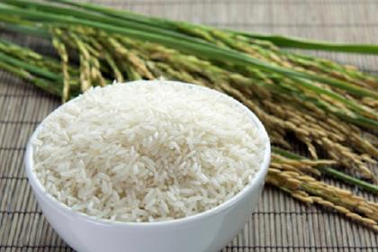 Cara menanam padi organik yang benar dengan berbagai keuntungannya