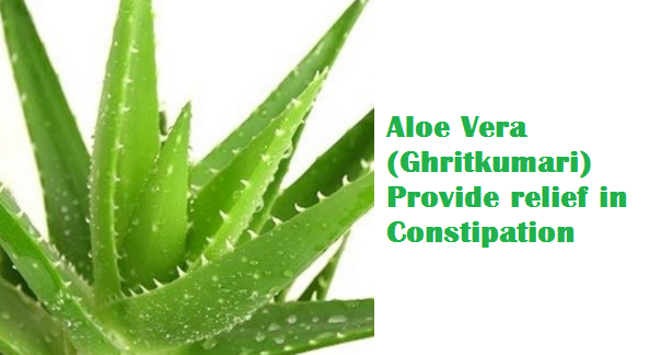 Aloe Vera (Ghritkumari) Provide relief in Constipation