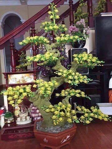 Goc bonsai mai dao goc truc tai Bich Cau