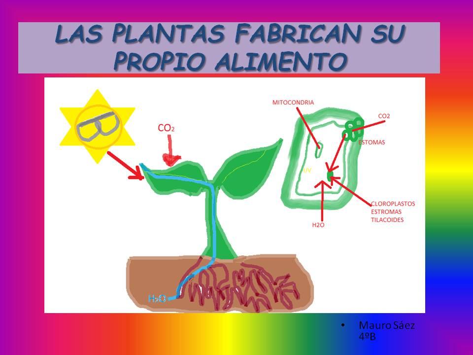 Cosas de ni os para la escuela las nutrici n de las - Cosas sobre las plantas ...