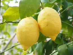 lemon img