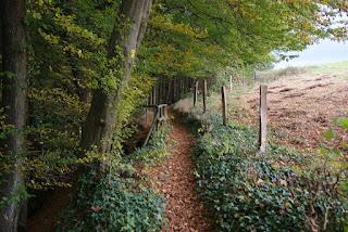 Ein Wanderweg führt am Waldrand entlang, rechts eine Weide, die eingezäunt ist. Dazwischen führt der schmale Wanderweg entlang.