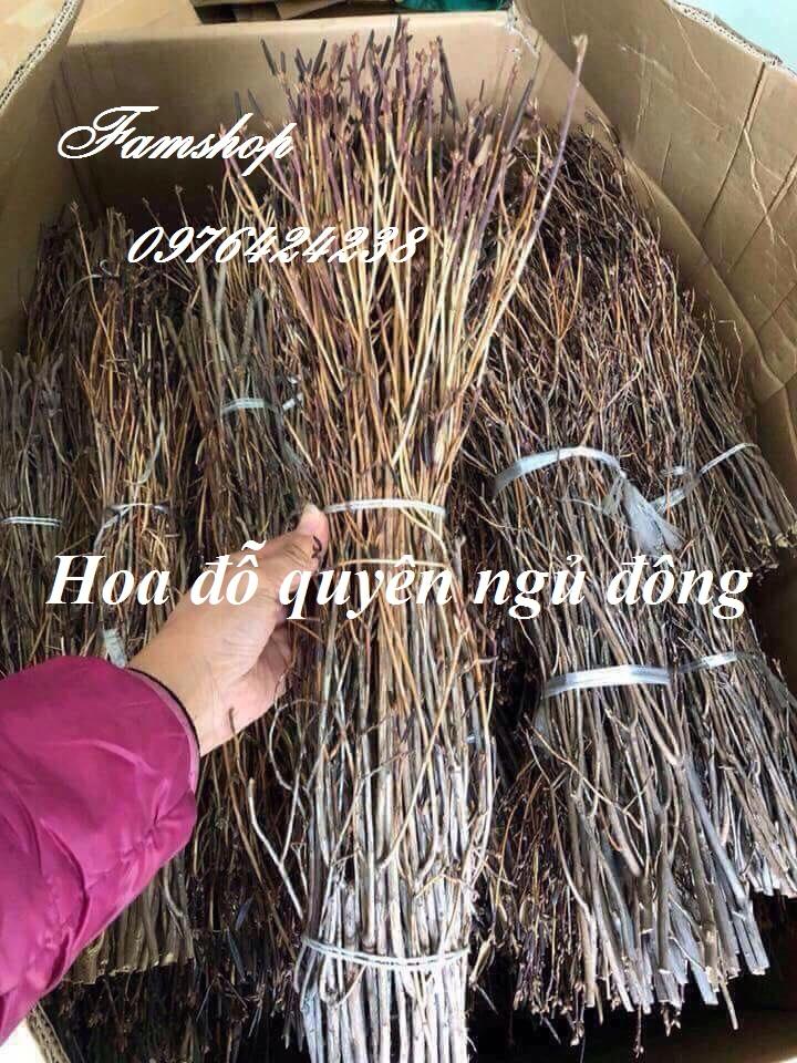 Hoa do quyen ngu dong tai Tay Ho