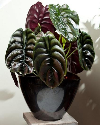 http://tipspetani.blogspot.com/2017/10/tanaman-hias-daun-yang-populer-di.html