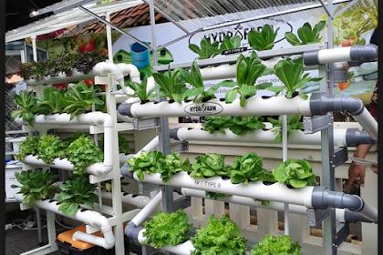 Belajar Cara Bertanam Hidroponik Untuk Pemula
