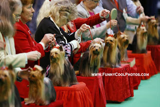 world famous dog show in england