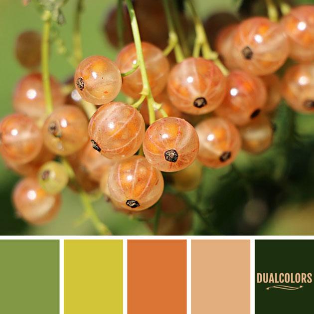 color_paleta_35
