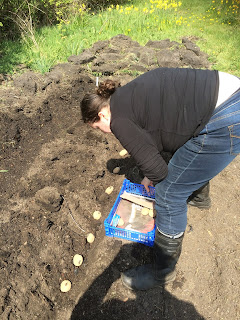 Potato trenching, planting potatoes, Harry Lime, Third Man, Life on Pig Row