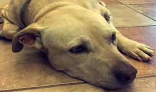 Individuato l'uomo che ha ucciso il cane a calci a Salerno