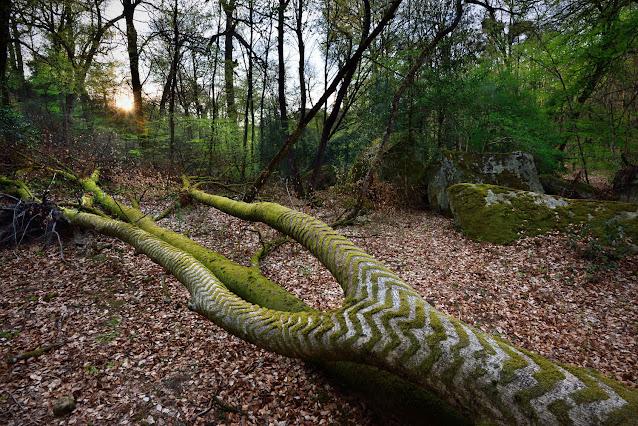 Catherine Miquel, La Gorge aux Loups, forêt de Fontainebleau.
