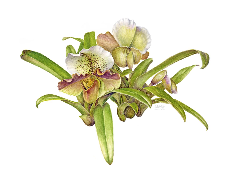 botanical illustration september 2012