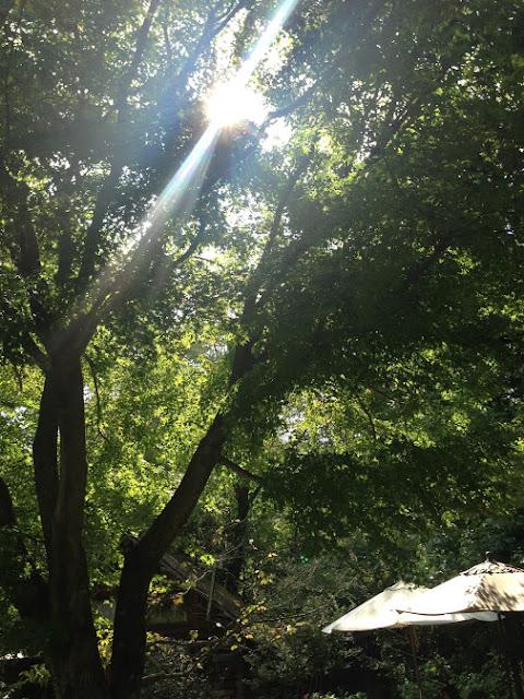 イメージ画像:木漏れ日