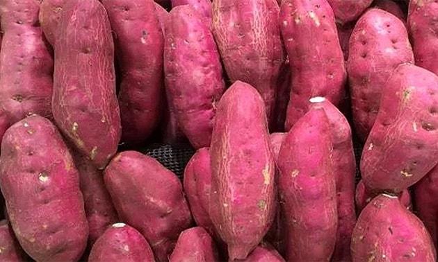 Batata-doce (Ipomoea batatas Poir.)
