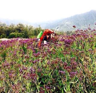 Bunga ungu di Oro - oro Ombo Gunung Semeru ternyata bukan bunga lavender