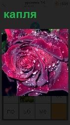 На темном фоне изображение бутона розы, на который упала капля росы