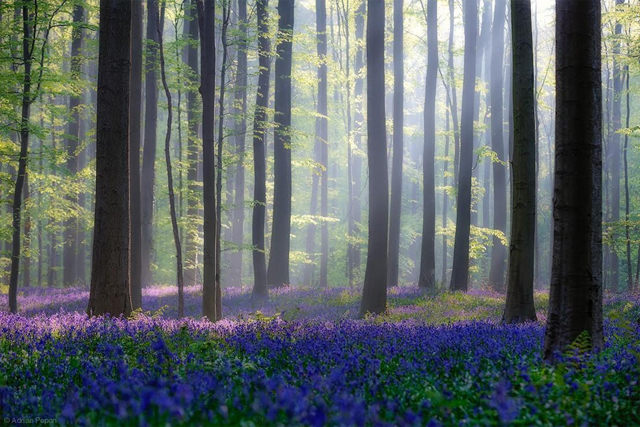 Belçika sihirli orman fotoğrafı