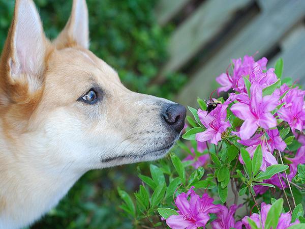 Cách Xử Lí Khi Chó Bị Ong Đốt