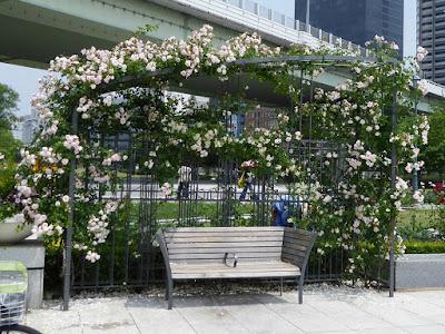 【大阪市北区】中之島公園のバラ園 バラのベンチ