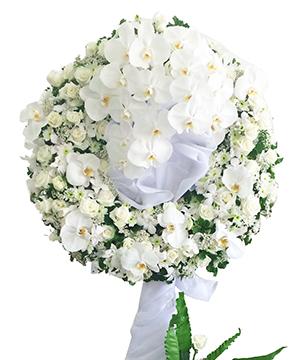 Kết quả hình ảnh cho hoa tang le