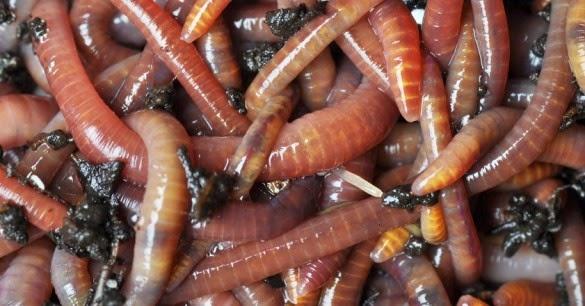 worms 585x306 - Realizado el primer paso hacia la auténtica inteligencia artifial