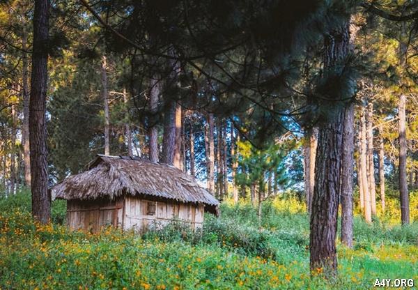 ngôi nhà nhỏ giữa rừng hoa Đà Lạt