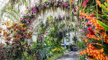 Singapur en el festival de orquídeas del Jardín Botánico de Nueva York