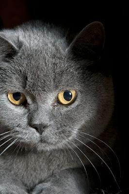 gat bonic