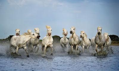 [Giải đáp] -  Mơ thấy lên núi thấy đàn ngựa trắng phía sau