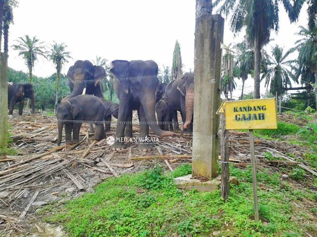 Konservasi Gajah Tangkahan