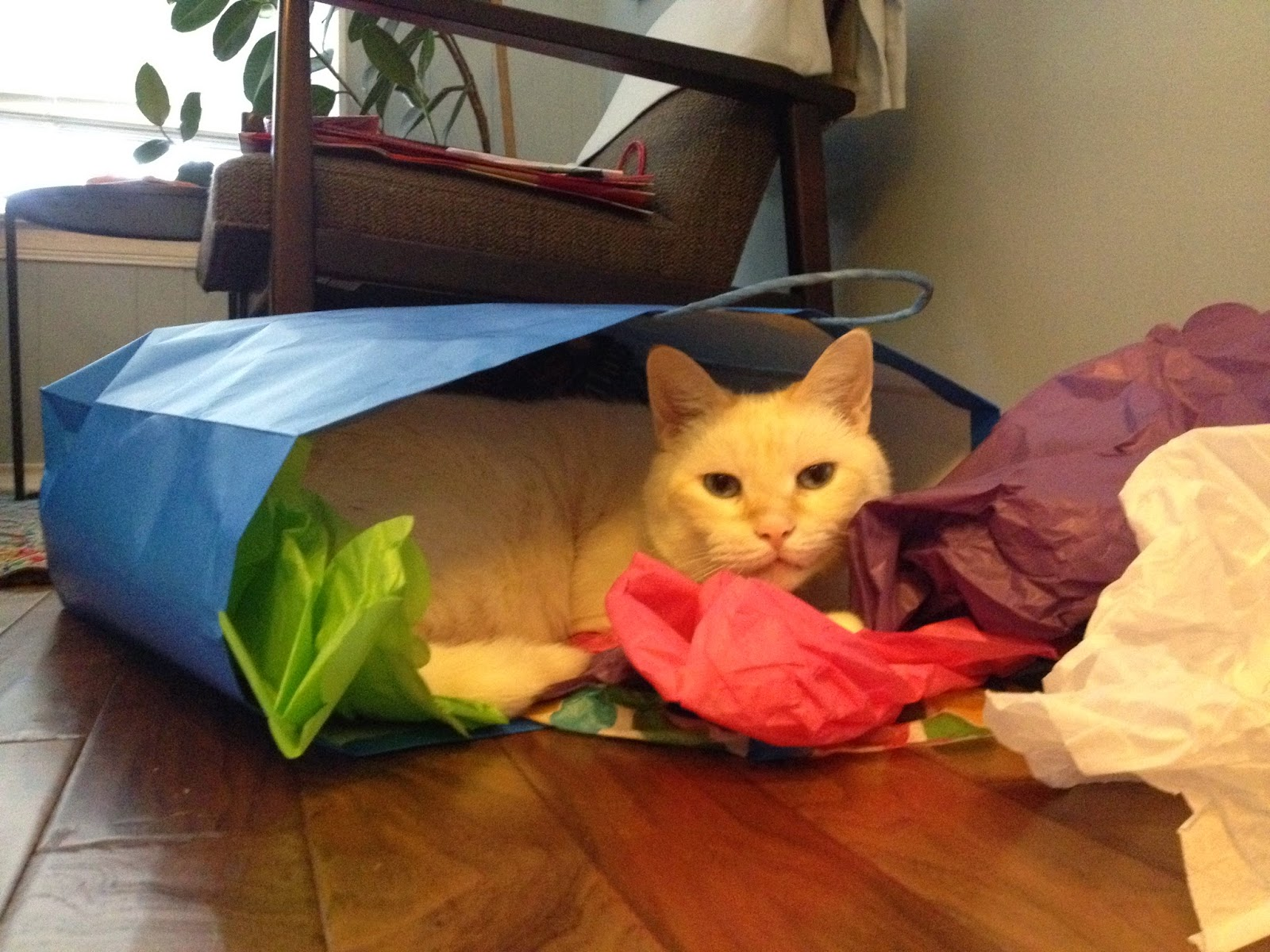 Charlie the cat hiding in a Christmas bag