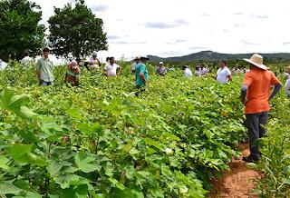 Governo investe em algodão agroecológico e promove dia de campo para atrair agricultor