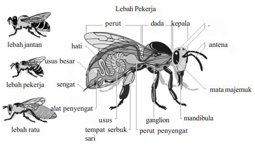 Peranan Arthropoda
