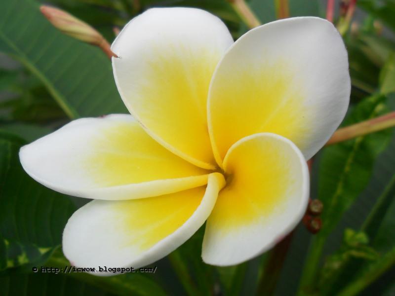 Small White Flower Yellow Center Name Gardening Flower And Vegetables