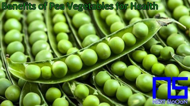 Pea Vegetables, What Is Pea Vegetables, Understanding Pea Vegetables, Explanation of Pea Vegetables, Benefits of Pea Vegetables for Health, Benefits of Pea Vegetables for the Body, Nutrition of Pea Vegetables, Vitamins for Pea Vegetables, Vitamins and Pea Vegetables Nutrition for Body Health, Get a Healthy Body with Pea Vegetables, Information about Pea Vegetables, Complete Info about Pea Vegetables, Information About Pea Vegetables, How the Nutrition of Vitamin Pea Vegetables is, What are the Benefits of Pea Vegetables for the Body, What are the Benefits of Pea Vegetables for Health, the Benefits of Pea Vegetables for Humans, the Nutrition Content of Pea Vegetables provides many benefits for body health.