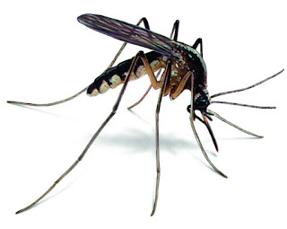 Mosquitoes are our friends, stop killing them – Ande