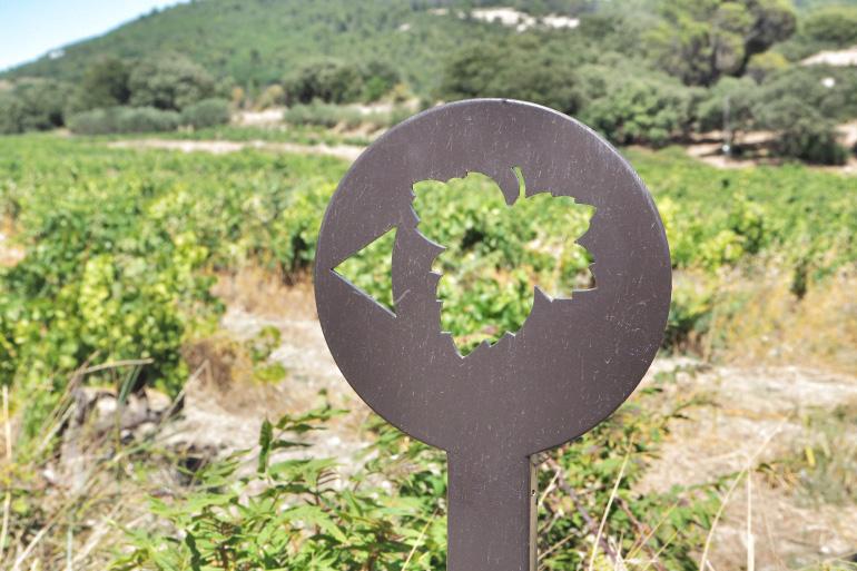 Randonnée dans le vignoble de Vacqueyras dans le Vaucluse