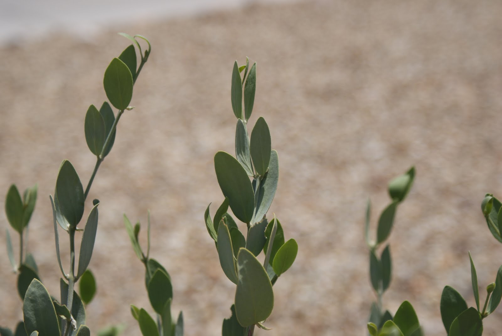 Day By Day: Desert Plant Adaptations