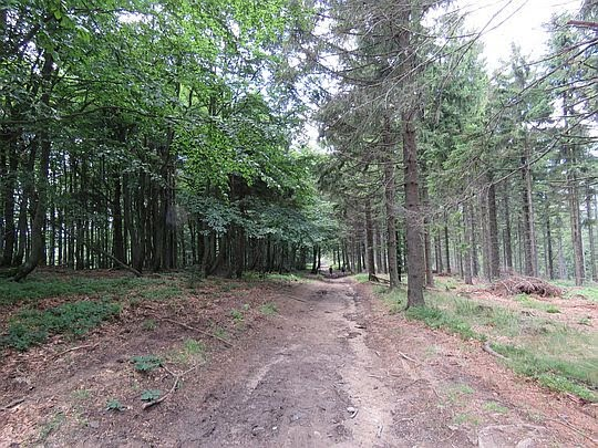 Las przed  Halą Łabowską.