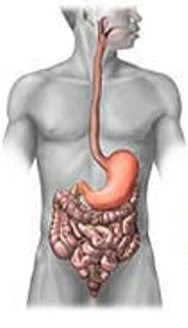 tract or digestive system is the system that is responsible for the digestion and absorpt Gastrointestinal Problems