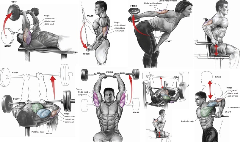 Six Exercises To Quickly Get The Triceps Of A Fitness