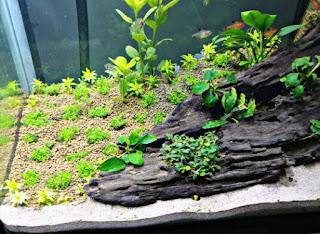 12 Cara Membuat Aquascape Sederhana untuk Pemula Lengkap ...