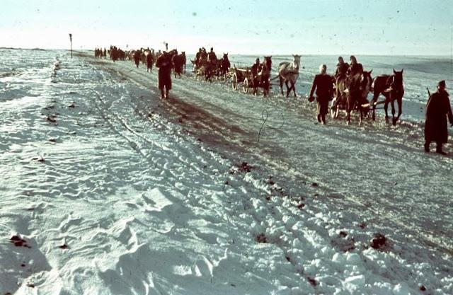 Horses in World War II worldwartwo.filminspector.com German column