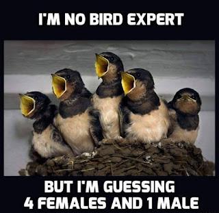 No Memes Bird