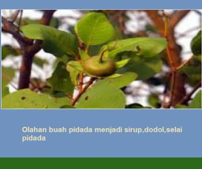 Olahan buah pidada menjadi sirup,dodol,selai pidada
