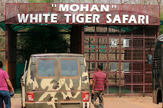 White tiger safari in Rewa Madhya Pradesh