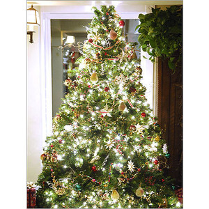 Green Christmas Tree 3in1 Luminaries  Favor Box Set of 6