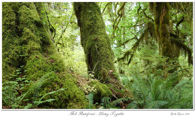 Hoh Rainforest:  Living Together