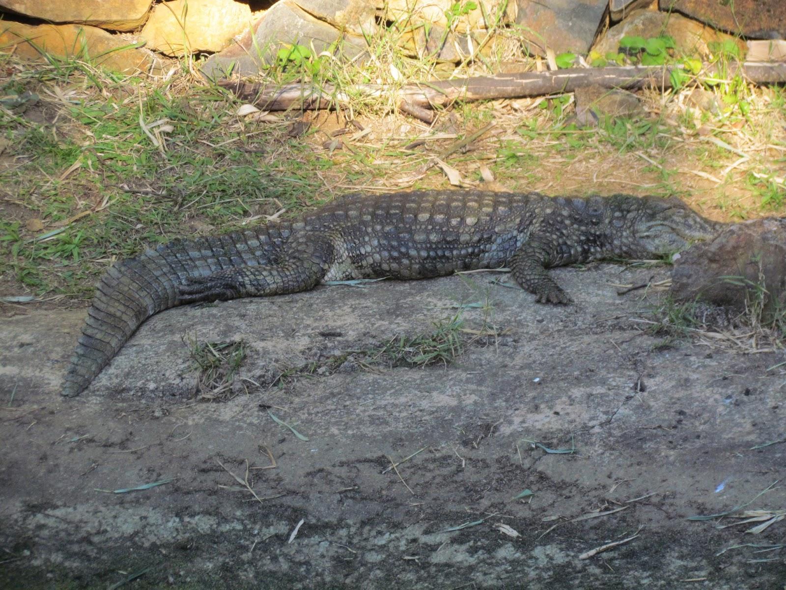 zoológico de Gramado