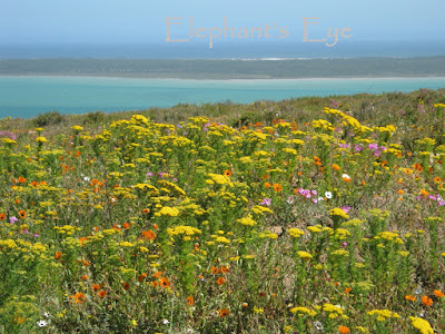 From Seeberg in the West Coast NP September 2010